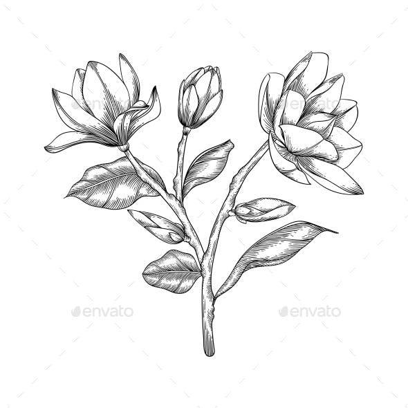 Hand drawn magnolia floral illustration