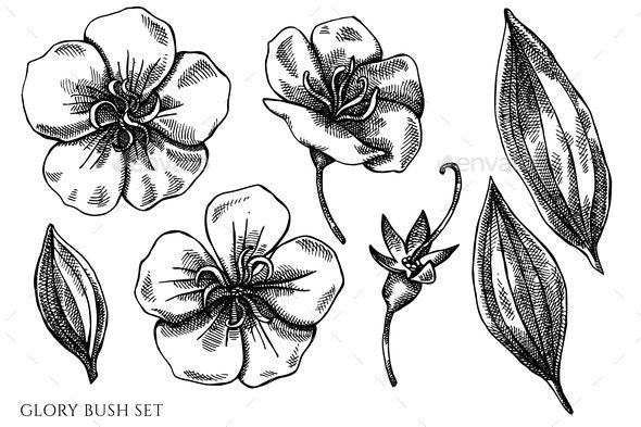 Vector Set of Hand Drawn Black and White Glory - Flowers & Plants Nature