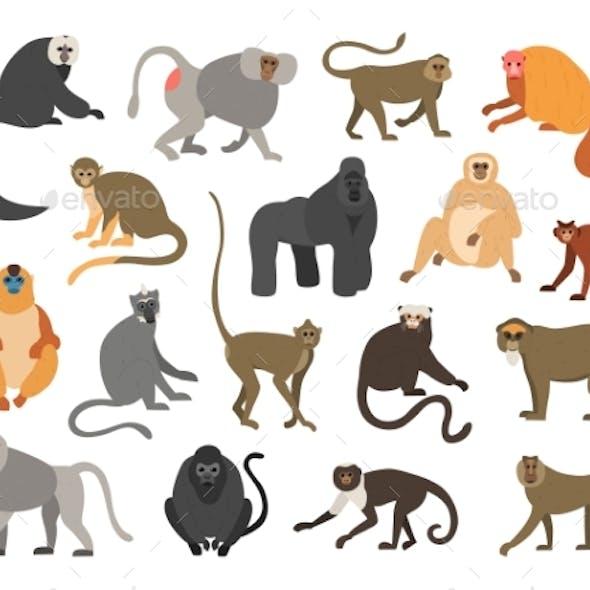 Cartoon Primates