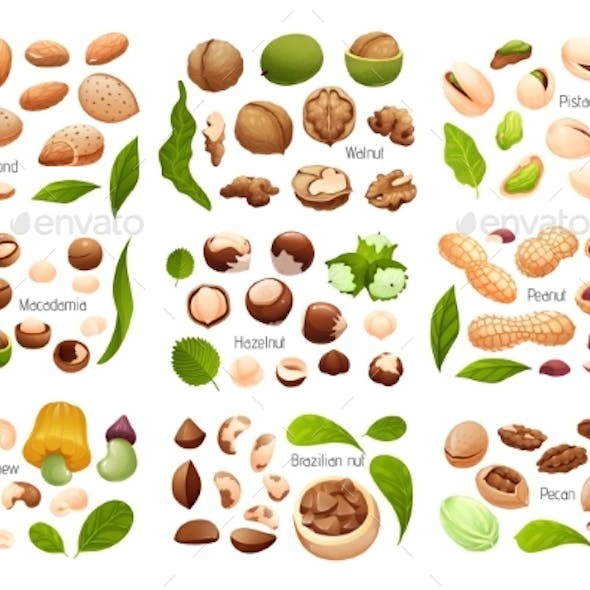 Big Set of Common Nuts Vector Isolated Objects