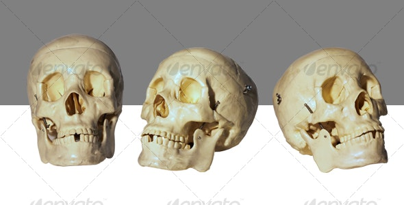 Human Skull Model - Nature & Animals Isolated Objects