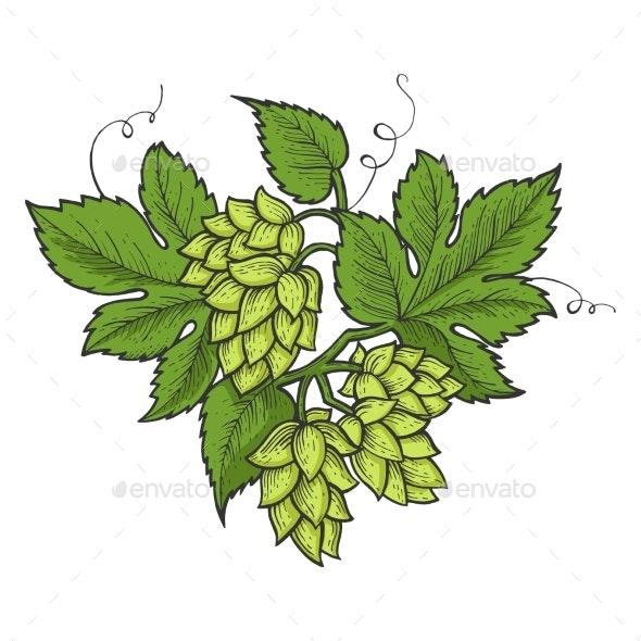 Hops Plant Line Art Sketch Vector Illustration - Flowers & Plants Nature