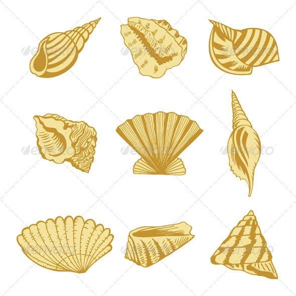 Sea shells design elements