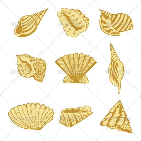 Sea shells design elements - Decorative Symbols Decorative