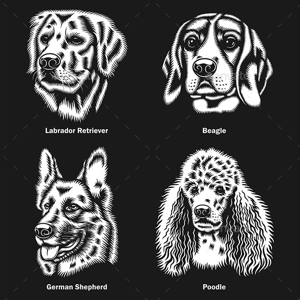Dog Heads of different Breeds Vector Graphic On Black - Animals Characters
