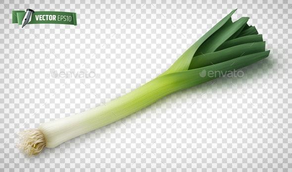 Vector Realistic Leek - Food Objects