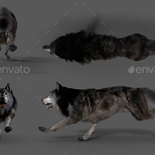 Wolf Run All Types