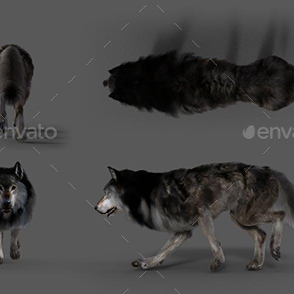 Wolf Walk All Types