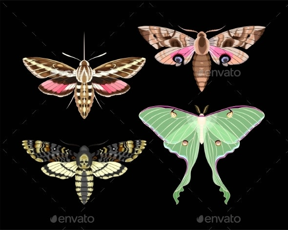 Vector Set of High Detailed Night Moths - Animals Characters