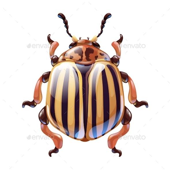 Cute Cartoon Colorado Potato Beetle Vector Art