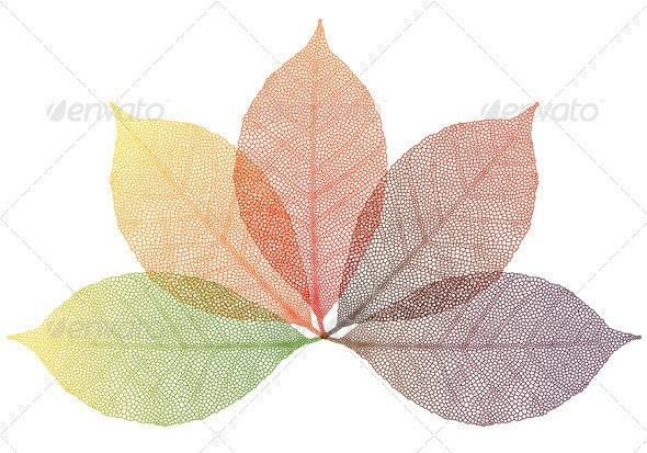 Autumn Leaves, Vector - Flowers & Plants Nature