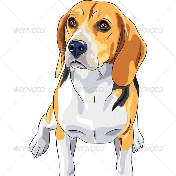 Sketch Dog Beagle Breed Sitting
