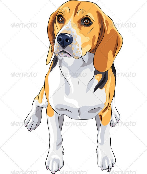 Sketch Dog Beagle Breed Sitting - Animals Characters