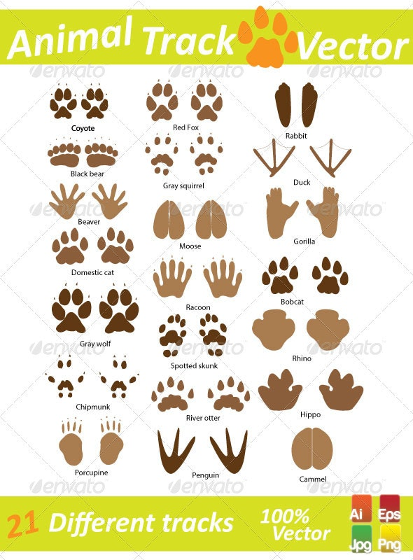 Animal Track Vector - Animals Characters