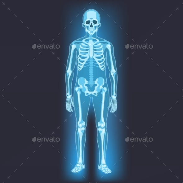 Vector Human Skeleton