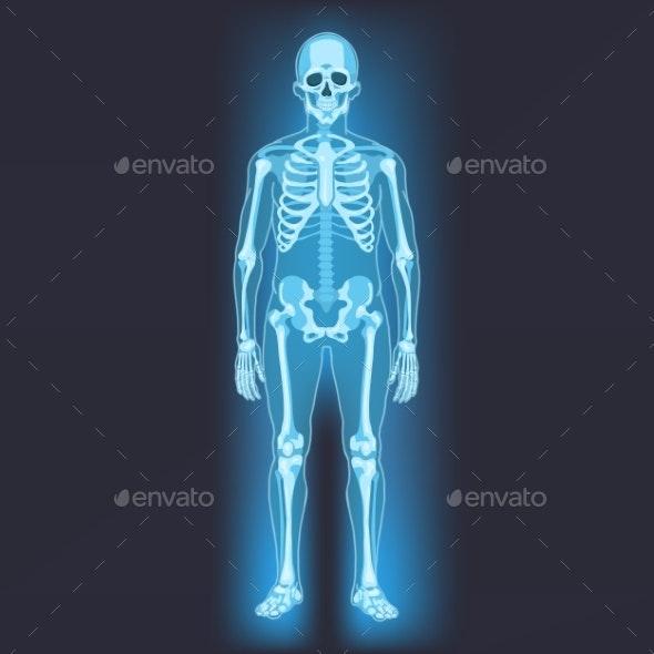 Vector Human Skeleton - People Characters