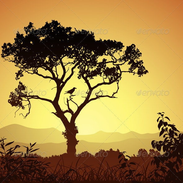 Tree Silhouette - Landscapes Nature