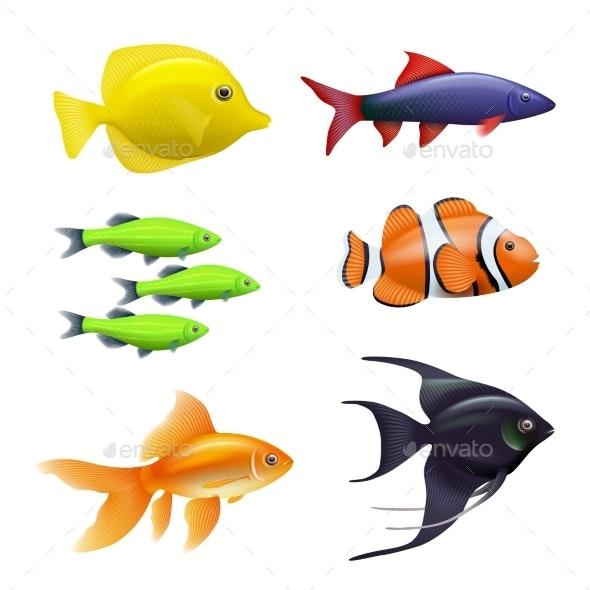 Realistic Aquarium Fishes - Miscellaneous Vectors
