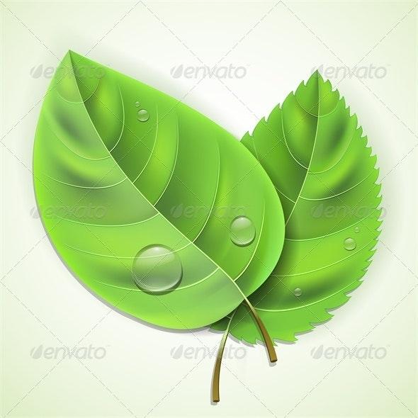 Fresh green leaves - Organic Objects Objects
