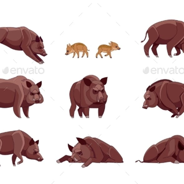 Set of Wild Boar in Different Poses Looking