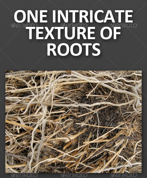 One Intricate Texture of Roots - Nature Textures