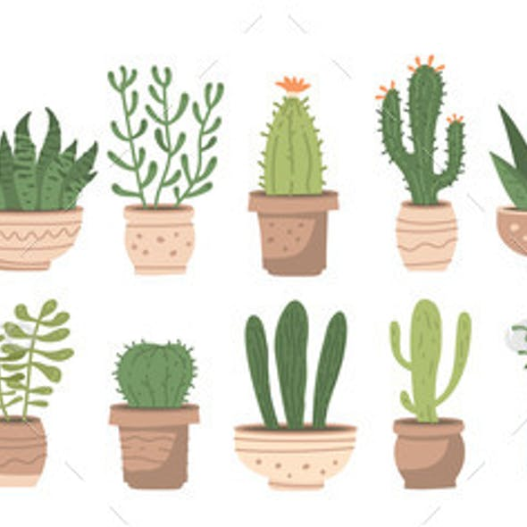 Big Houseplants Set with Different Cute Cacti