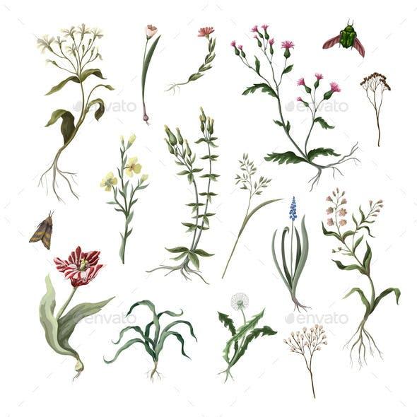 Wild Flowers Isolated