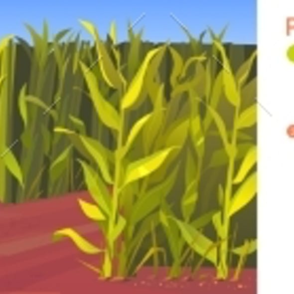 Parallax Background Cornfield with Road Pointers
