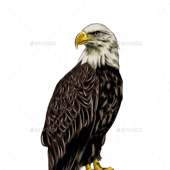 Bald Eagle From a Splash of Watercolor Colored