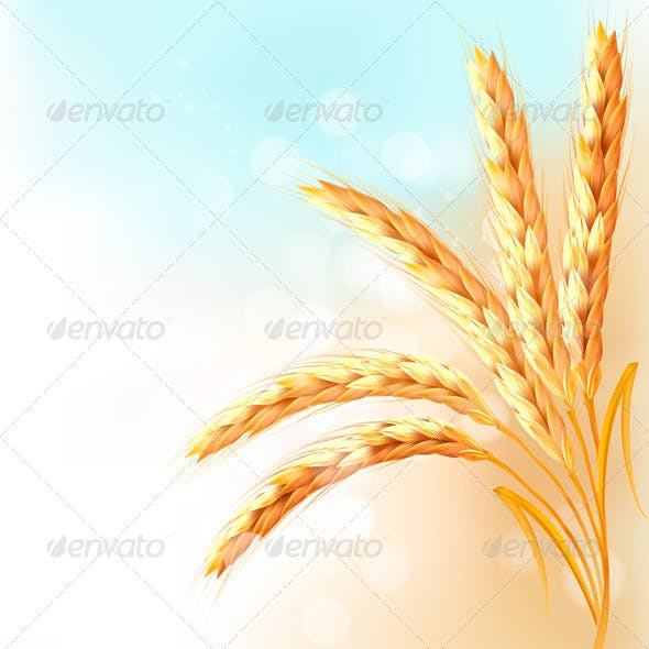 Ears of wheat in front of blue sky