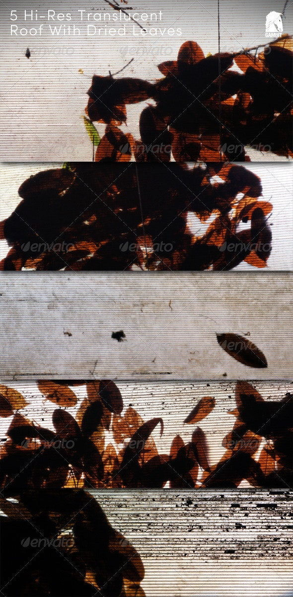 5 Hi-Res Translucent Roof With Dried Leaves - Urban Backgrounds