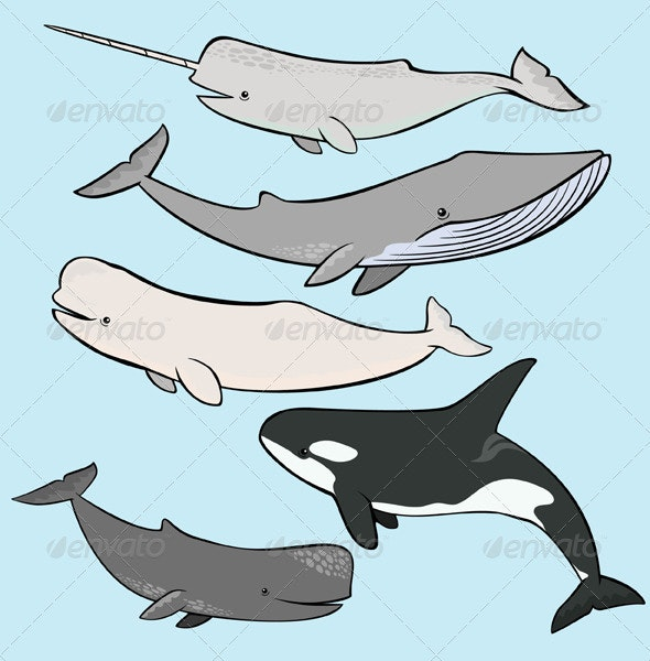 Marine Mammals Collection - Animals Characters