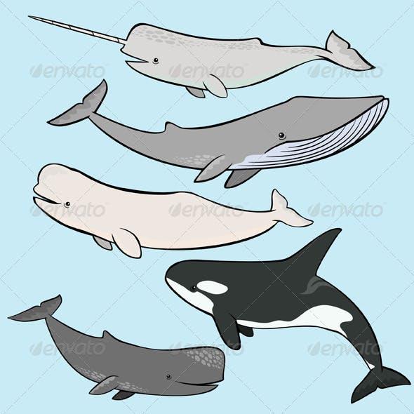 Marine Mammals Collection