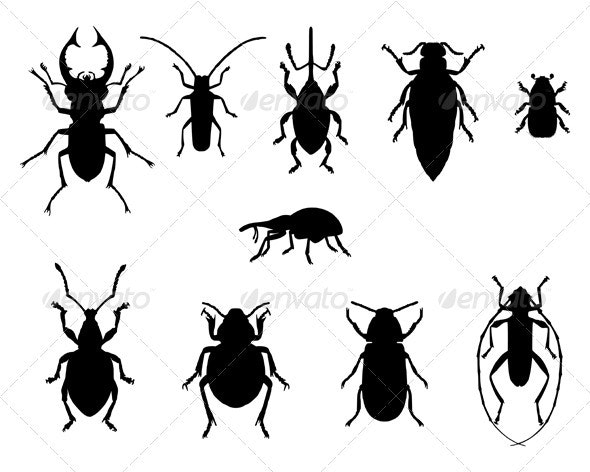 Beetles collection - Animals Characters