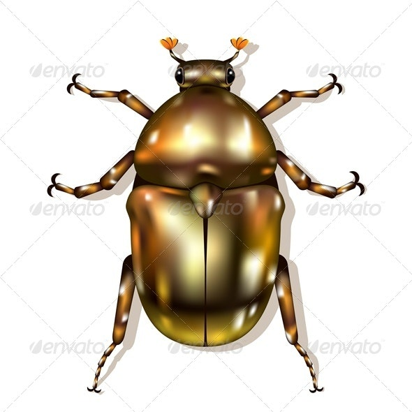 Vector Beetle - Animals Characters