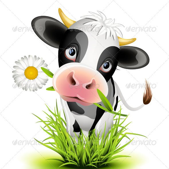 Holstein cow in grass