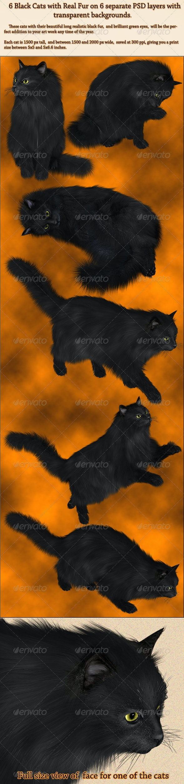 6 Black PNG Cats with Real Fur - Animals Illustrations