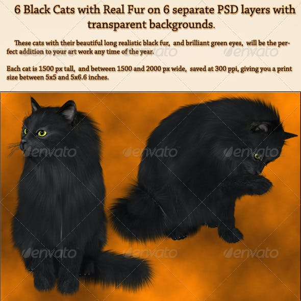 6 Black PNG Cats with Real Fur