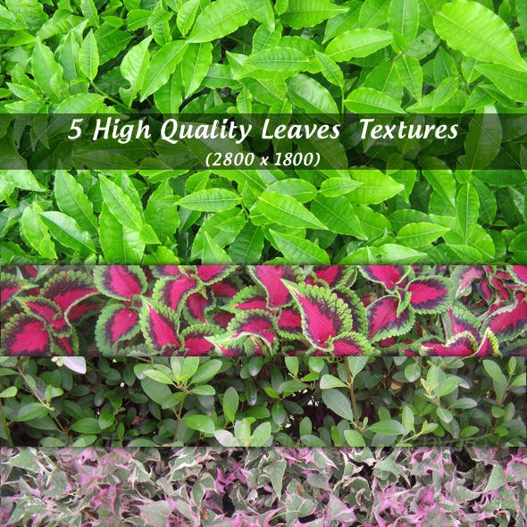 High Quality Leaves textures