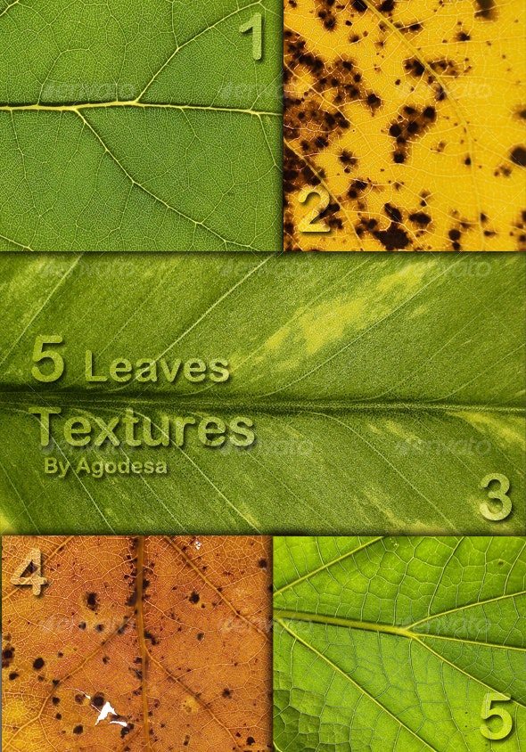 5 Leaves Textures - Nature Textures