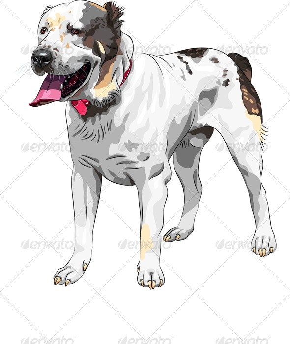 Vector Sketch Central Asian Shepherd Dog breed - Animals Characters