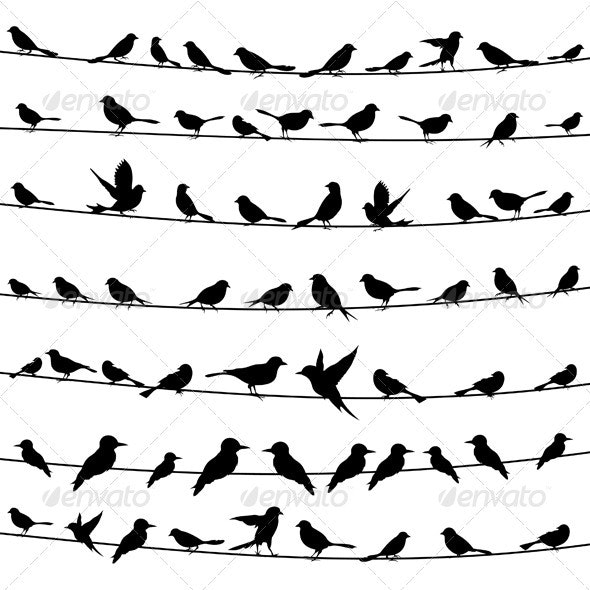 Bird on a wire4 - Animals Characters