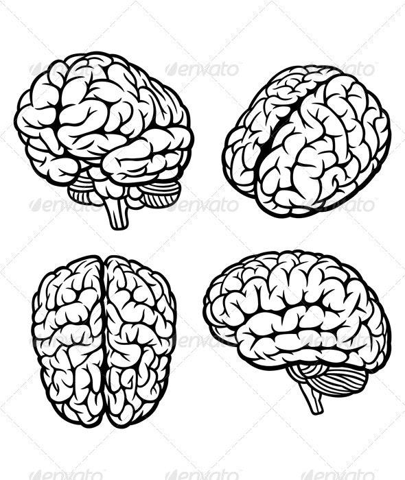 Human Brain - People Illustrations