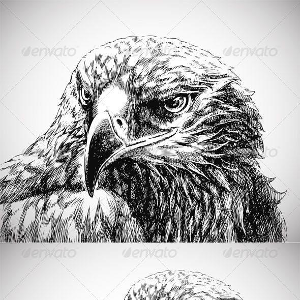 Eagle head line art - vector+jpg