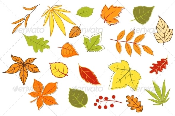 Colorful Autumn Leaves and Plants - Seasons Nature