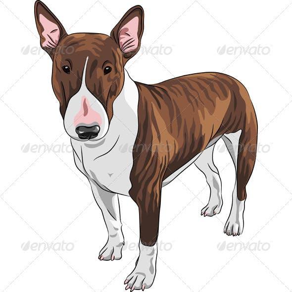 Vector Cartoon Brown and Tan Bull Terrier Dog