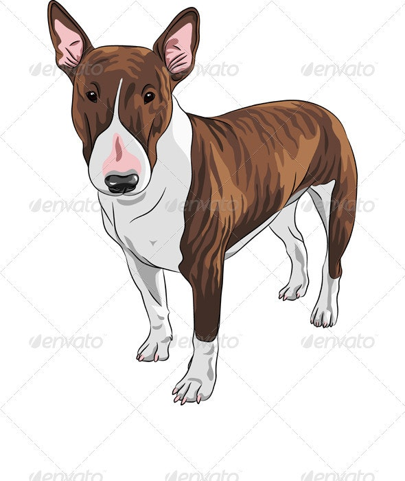 Vector Cartoon Brown and Tan Bull Terrier Dog - Animals Characters