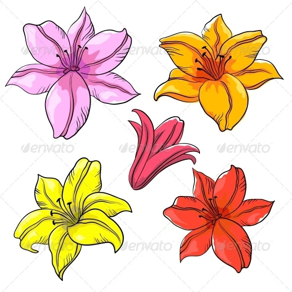 Flower Lily - Flowers & Plants Nature