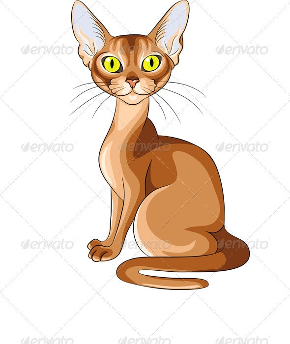 Vector Color Sketch of the Red Cat Abyssinian - Animals Characters