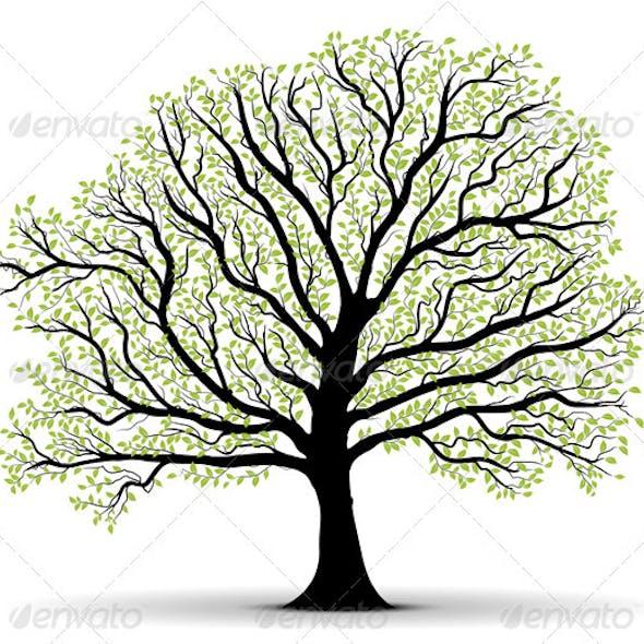Big Vector Tree Illustration Silhouette